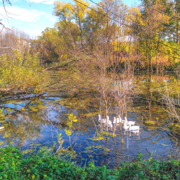 Russian countryside: geese and rivers