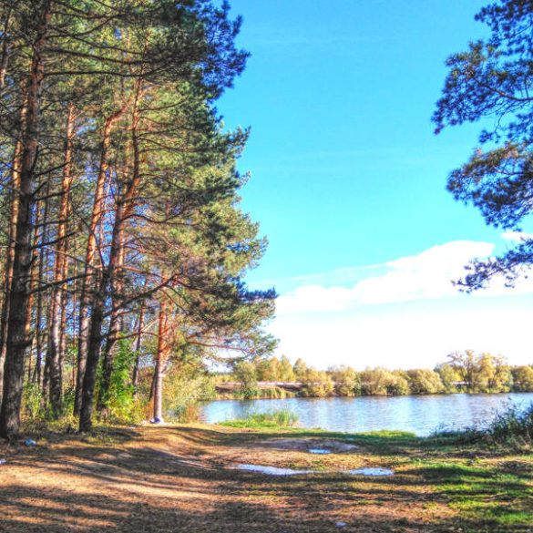 Russian countryside: ponds and forests