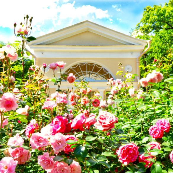 Pavlovsk Museum: summer day in the parks of the Pavlovsk Museum