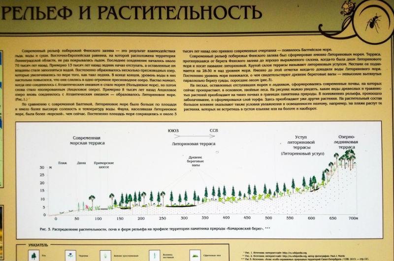 The ledge of the Littorina Sea, the ancestor of contemporary Baltic Sea.